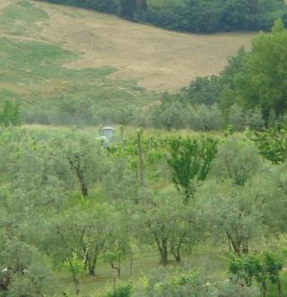 spraying vines